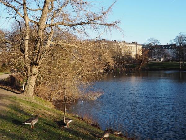 Leje København Nørre Farimagsgade Ørstedsparken Lejlighed Lejelejlighed udlejning lejebolig