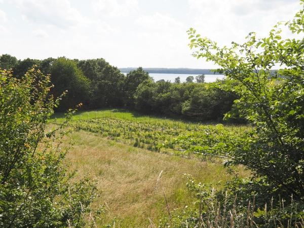 Møbleret landejendom Tikøb udsigt sø frugthave terrasser vinmark stråtækt